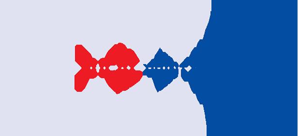 Focal Print N Pack